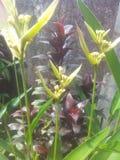 Waite kwiat Zdjęcia Stock