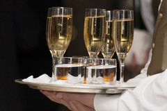 Waiter serving champagne. Closeup portrait of waiter holding champagne glasses on tray Royalty Free Stock Images