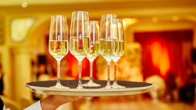 Waiter serving champagne on a tray. Full glasses of champagne on tray Royalty Free Stock Images