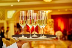 Waiter serving champagne on a tray. Full glasses of champagne on tray Royalty Free Stock Image