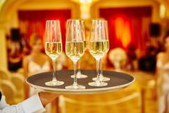 Waiter serving champagne on a tray. Full glasses of champagne on tray Stock Photography
