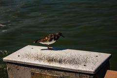 Waitig pour un peu de nourriture sur Juno Beach Pier photos libres de droits