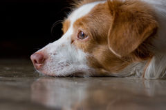 Waiting. Owner waiting of dog in darkness Stock Photography