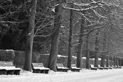 Waiting. Benches waiting for spring schloss nymphenburg munich stock photo