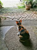 Waiting. Cat sitting on ground stock photo
