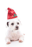 Waiting for Christmas. A small white maltese terrier pet dog lying down and wearing a sequin Santa red hat Stock Images