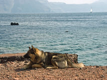 Waiting on coast. The dog waits on the coast of his master Stock Photos