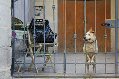 Waiting dog Royalty Free Stock Photos