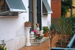Waiting dog. In the garden Stock Photography