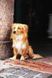 Waiting doggy Stock Image