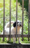 Waiting dogs behind the fence. The lonely dogs behind bars Royalty Free Stock Photography