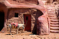 Waiting donkey Petra. Lonely donkey is waiting, tied on a door of ancient pink coloured ruins of Petra, Jordan Stock Image