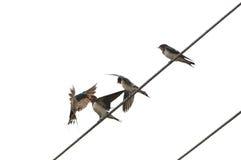 Waiting for feeding. Three birds waiting for feeding Stock Image