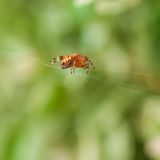 A Waiting Game. A small spider sits in its lair Stock Images