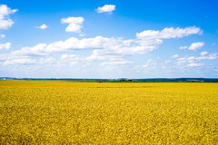 Waiting for harvest. In Belarus Royalty Free Stock Images
