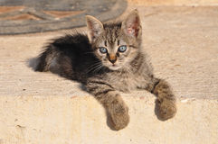 Waiting kitten Stock Image
