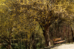 Waiting 2. A lonely bench under a yellow tree, waiting in a peacefull environment Stock Images