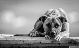 Waiting for a new home Royalty Free Stock Photography