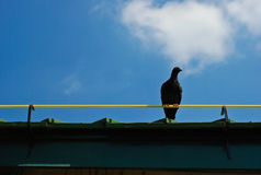 Waiting of one bird Royalty Free Stock Photo
