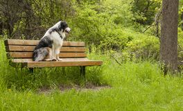 Waiting Patiently Royalty Free Stock Photography