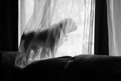 Waiting Pug. A pug waits and looks out the window Stock Photo