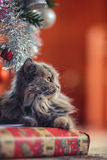 Waiting Santa Claus concept. Cute cat laying over christmas pres Royalty Free Stock Photos