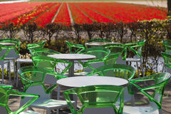 Waiting to be seated. Green chairs and white tables, a terrace with a view of tulips in the Netherlands Stock Images