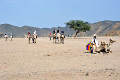 Waiting tourists. An arab man with two camels waiting tourists for desert tour. The calem tour is a typical business in the desert - El Quseir - Marsa Alam Stock Images