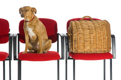Waitingroom veterinary Stock Photos