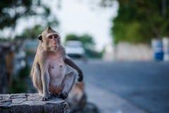 Waitng solo della scimmia per un amico fotografia stock