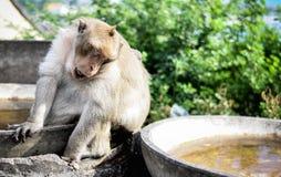 Waitng solo della scimmia per un amico fotografie stock