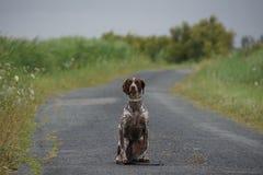 Waitnig do cão em uma rua só Fotografia de Stock