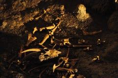 Waitomo caves. Bones in the Waitomo caves, New Zealand Royalty Free Stock Photos