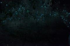 Waitomo-Leuchtkäfer-Höhlen, Waikato, Neuseeland stockbilder