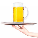 Waitresses holding tray with light beer isoalted Stock Image