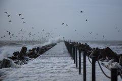 Waiwes, espuma do mar e berds frios em Thisted, Dinamarca imagens de stock royalty free