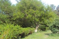 Wakacje Ładna natura dla yoy zdjęcie stock
