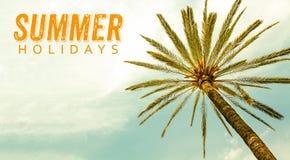 Wakacje Letni tekst i drzewko palmowe przeciw pogodnego jasnego nieba panoramicznemu tłu zdjęcia stock