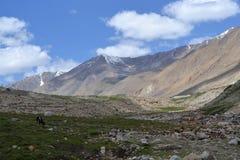 Wakacje w śnieżnych górach z greenery Fotografia Royalty Free