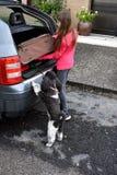Wakacje z psem zdjęcia stock