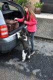 Wakacje z psem zdjęcia royalty free