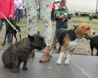 Wakacji zwierzęta domowe Fotografia Royalty Free