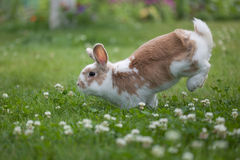 wakacyjny królik Zdjęcia Royalty Free