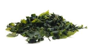 Wakame dell'alga (lat Undaria pinnatifida) fotografia stock libera da diritti