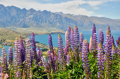 Wakatipu湖,在昆斯敦附近,新西兰 免版税库存照片