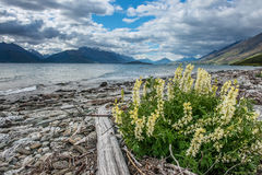 Wakatipu lake, New Zealand. Stock Photo