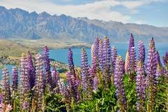 Wakatipumeer, dichtbij Queenstown, Nieuw Zeeland Royalty-vrije Stock Foto's