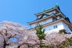 Wakayama Castle with sakura Stock Images