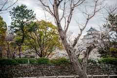 Wakayama Castle standing atop the hill with cherry blossoms in the foregound. Wakayama Castle standing atop the hill with cherry blossoms in the foreground stock photo