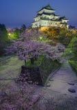 Wakayama kasztel Sakura fotografia royalty free